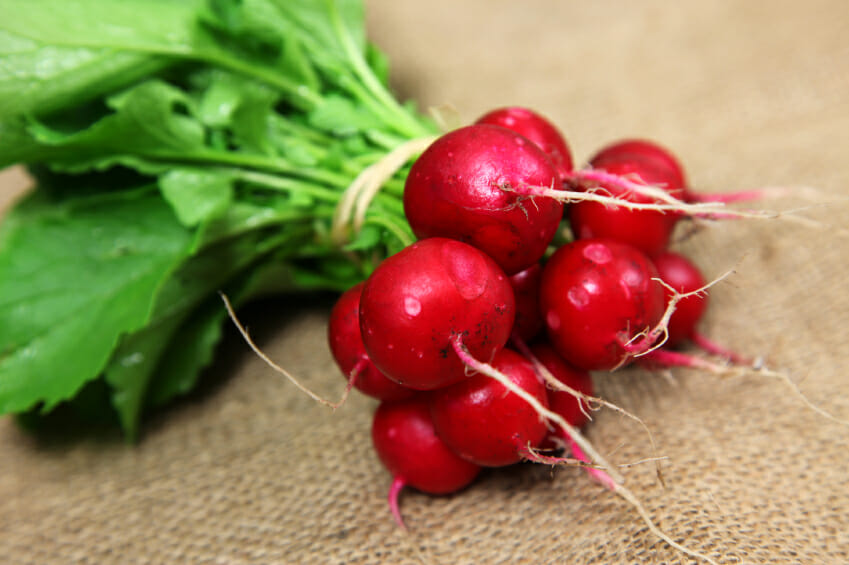 ripe radishes in a bunch with green stems wrapped with rubber band