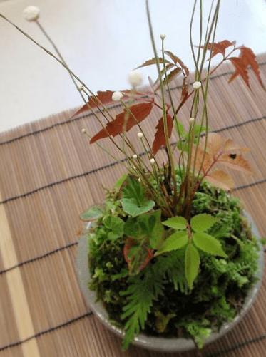 白玉の苔玉