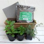 ベランダで手軽に始められる初心者のためのハーブ栽培セット