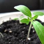植物が元気に育つ良い土は小さな生き物のお陰です。