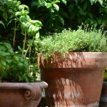 根鉢を崩す?崩さない?迷ったら細根を見よう!直根・ひげ根の特徴と植物