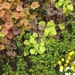 壁面緑化パネルとハンギングに春の植物!環境に優しい効果で美観も向上