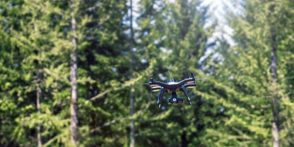 drones in forestry