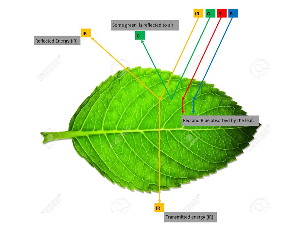 Vegetation Spectral Signature Cheat Sheet