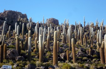 An island of cacti in the middle of the salar. source: gringoinbolivia