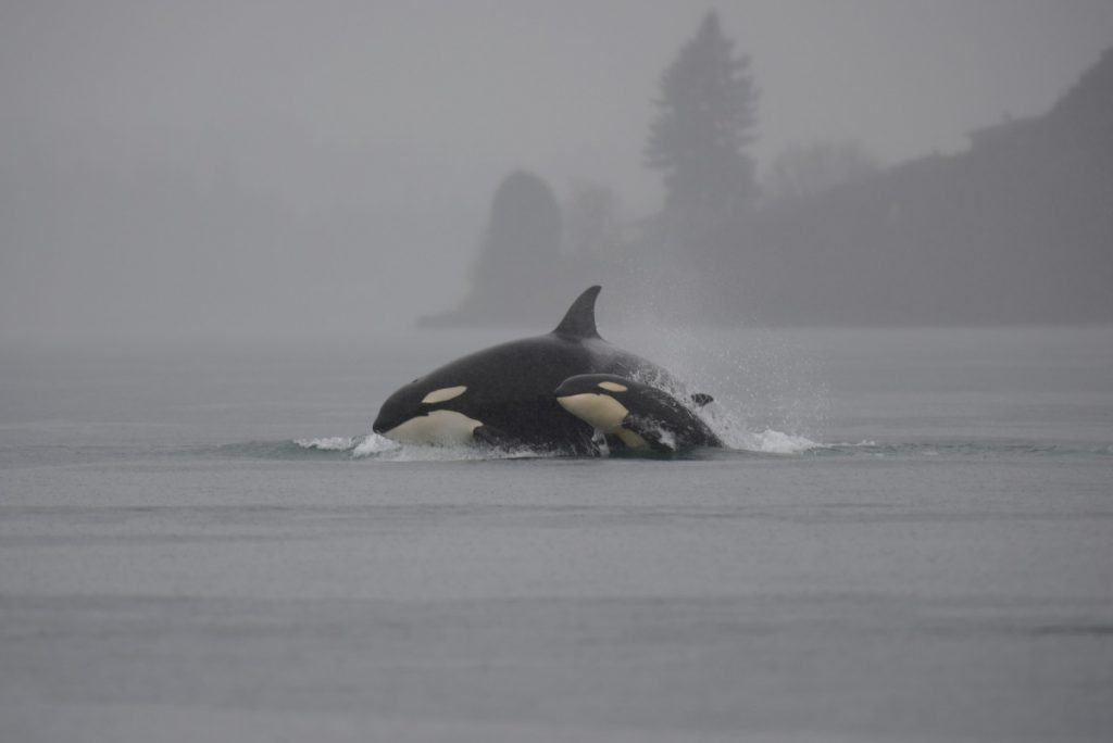 Skip the Boat Ride: Go Whale Watching in Tacoma