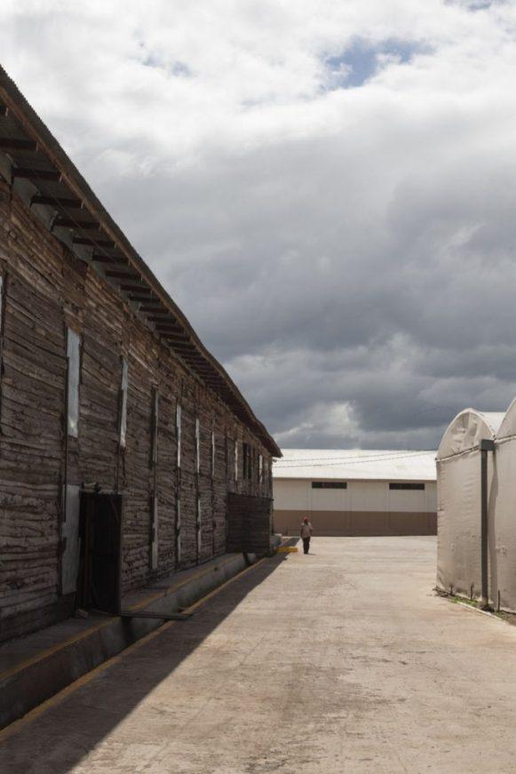 Perdomo factory tour_013