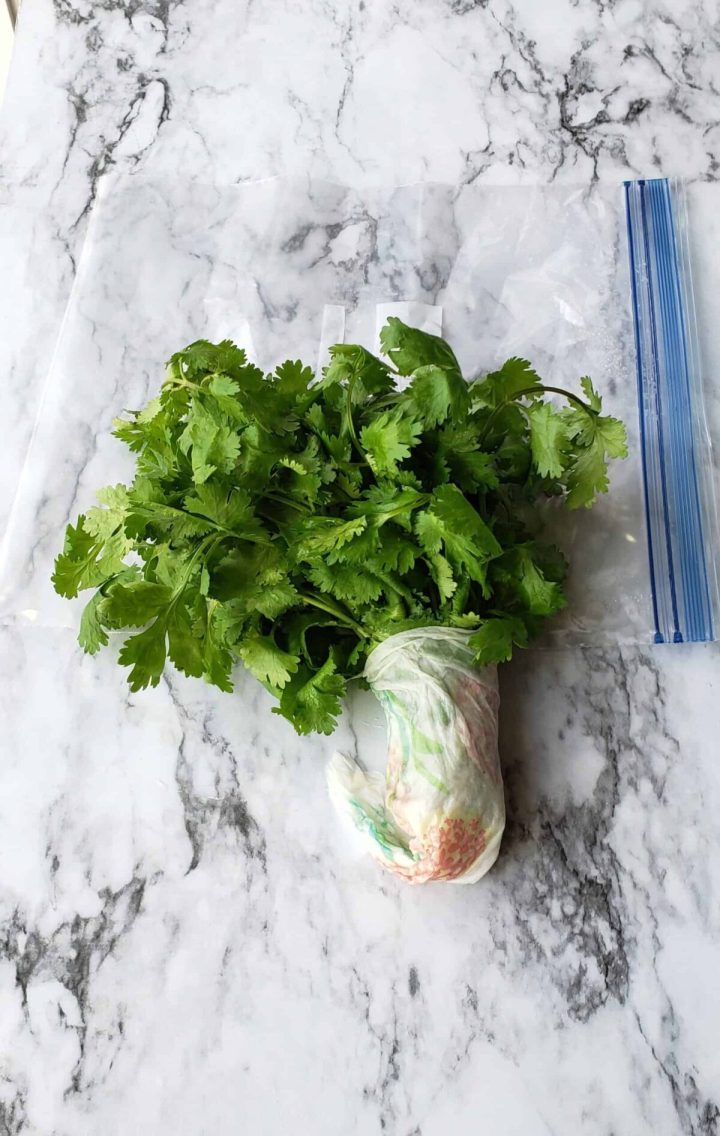 fresh cilantro in damp paper towel around the stems so they stay