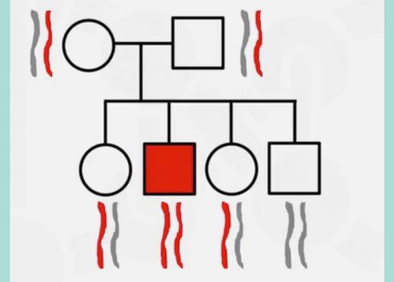 family tree with chromosomes