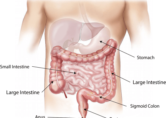 location of the stomach