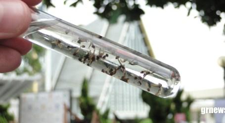 População se conscientiza e reduz número de notificações de Dengue em Pará de Minas