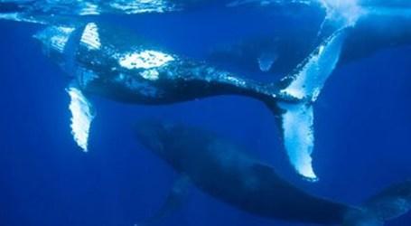 Temporada de observação de baleias começa no Uruguai