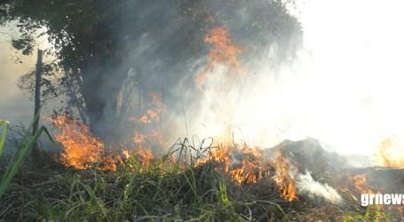 Após prender incendiários, Polícia de Meio Ambiente pede que cidadão denuncie quem ateia fogo na vegetação
