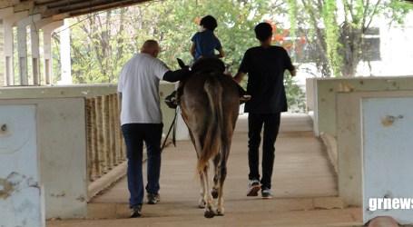 Centro de Equoterapia de Pará de Minas realiza 250 atendimentos mensais a pacientes com paralisia cerebral e autismo
