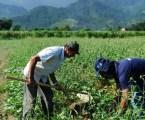 Fundos têm R$ 46,3 bilhões para produtores rurais e pequenos empresários do Norte, Nordeste e Centro-Oeste