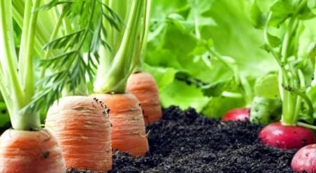 Hortas domésticas garantem alimentação nutritiva e diversificada