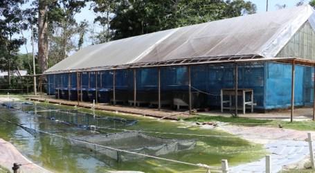 Inaugurado em Manaus laboratório de nutrição e saúde de peixes