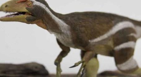 Pesquisadores apresentam fóssil de espécie inédita de dinossauro encontrado no Ceará