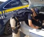 MG: apreendidos mais de 100 kg de maconha dentro de veículo