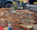 PRF apreende aves e prende foragido da Justiça em MG