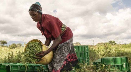 África pretende acelerar avanços nas metas globais contra a insegurança alimentar