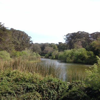 At the Golden Gate Park