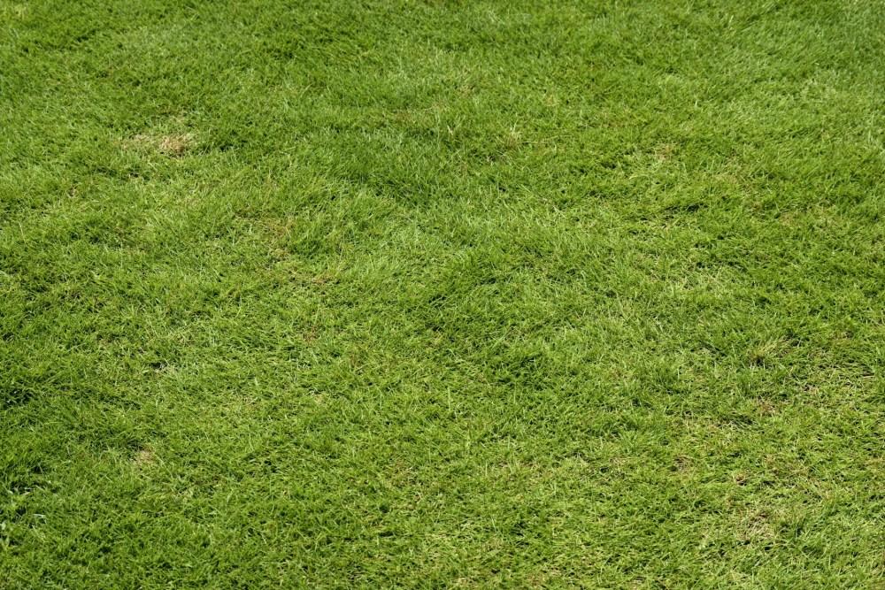 green-lawn-grass-background.jpg