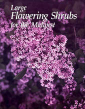 large flowering shrubs