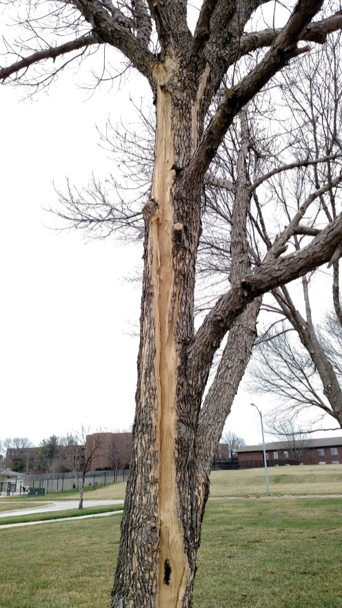 Lightning Damage to Ash