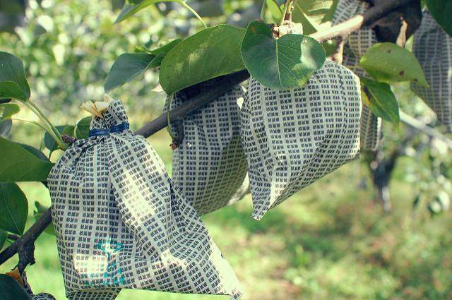 fruit bags for fruit trees