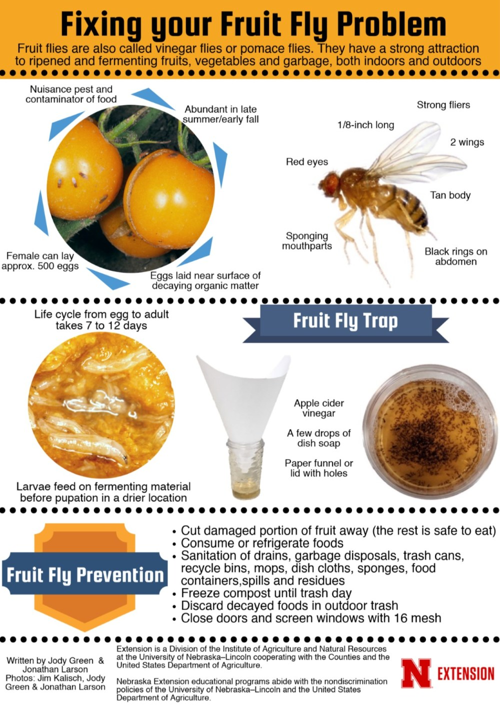 Fruit fly infographic