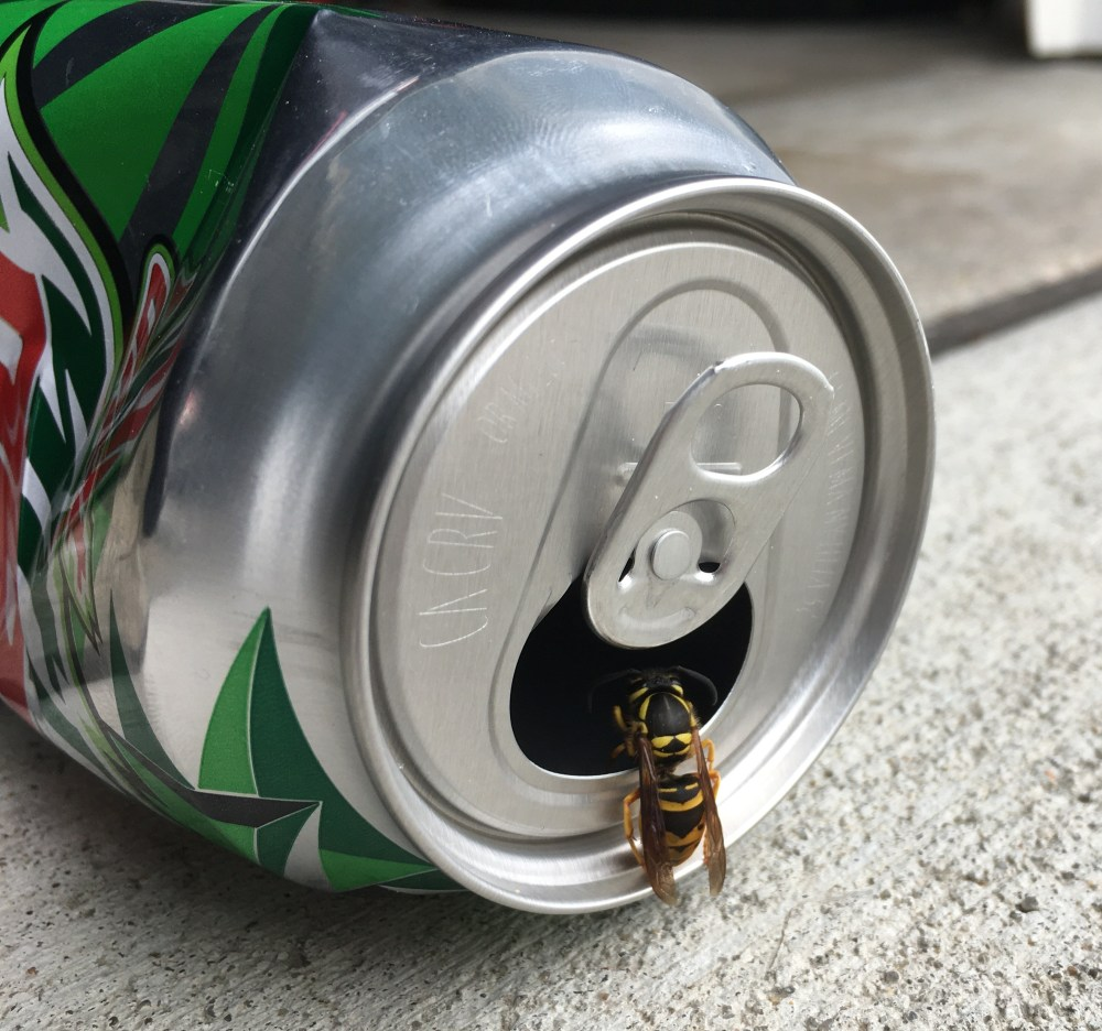 yellowjacket in pop can