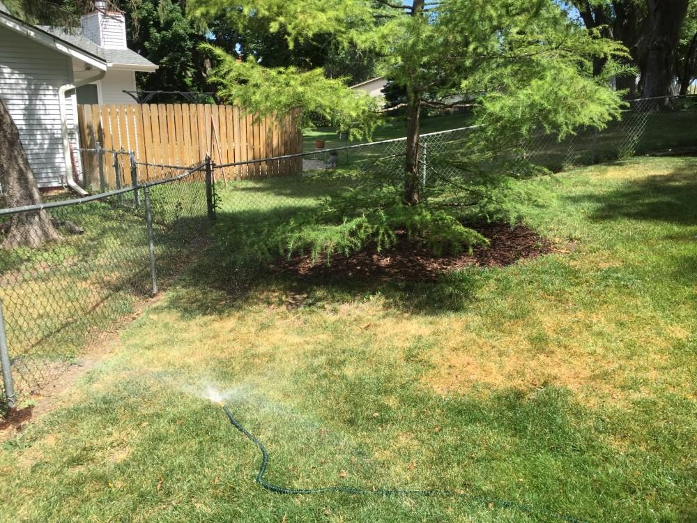 watering tree left