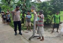 Ular King Kobra Sepanjang 4 Meter yang Kejutkan Warga Grobogan Berhasil Ditaklukan Lalu Diserahkan ke Petugas Damkar