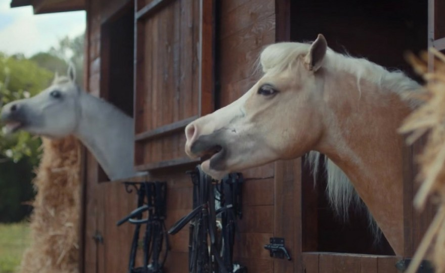 Volkswagen – Horses laugh