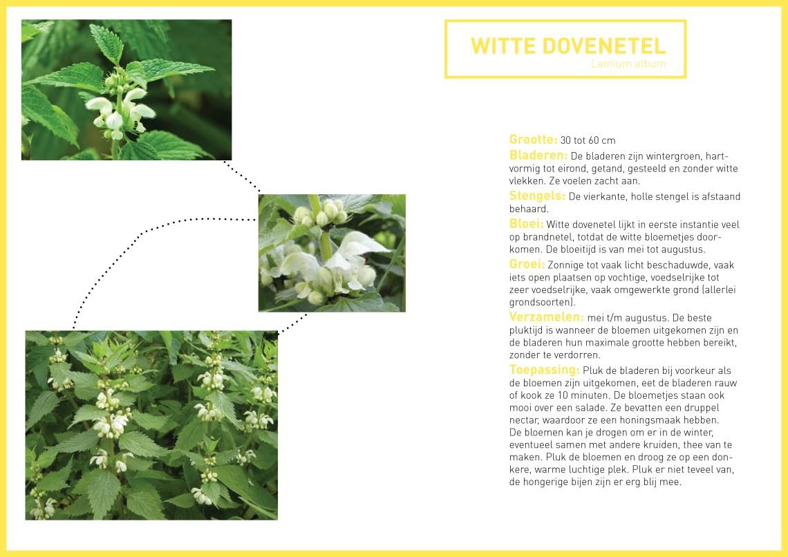 Witte dovenetel - groene avonturen