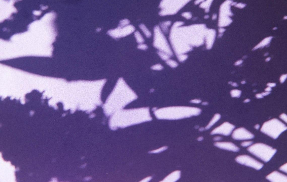 wildplukken-canadese-gulden-roede-groene-avonturen-2