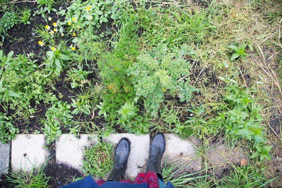 groene-avonturen-moestuin-permacultuur-9