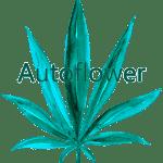 MixedSeedBag_Autoflower