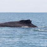 Reisdagboek #18: walvis spotten in Salinas