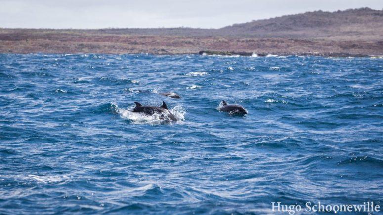 Dolfijnen San Cristóbal