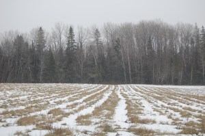 Snow covered rows
