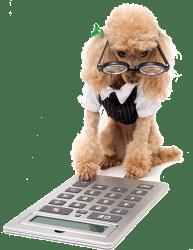 accountant-dog