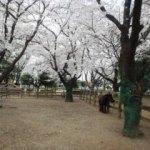 館林市緑町中央公園
