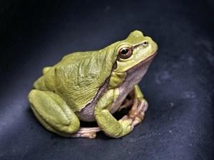frog evidence perception believe