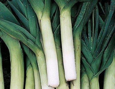 Сорта лука на зелень в теплице