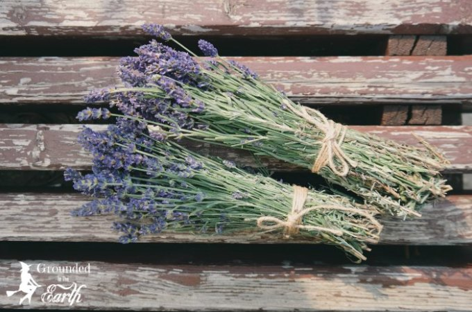 magical uses for lavender