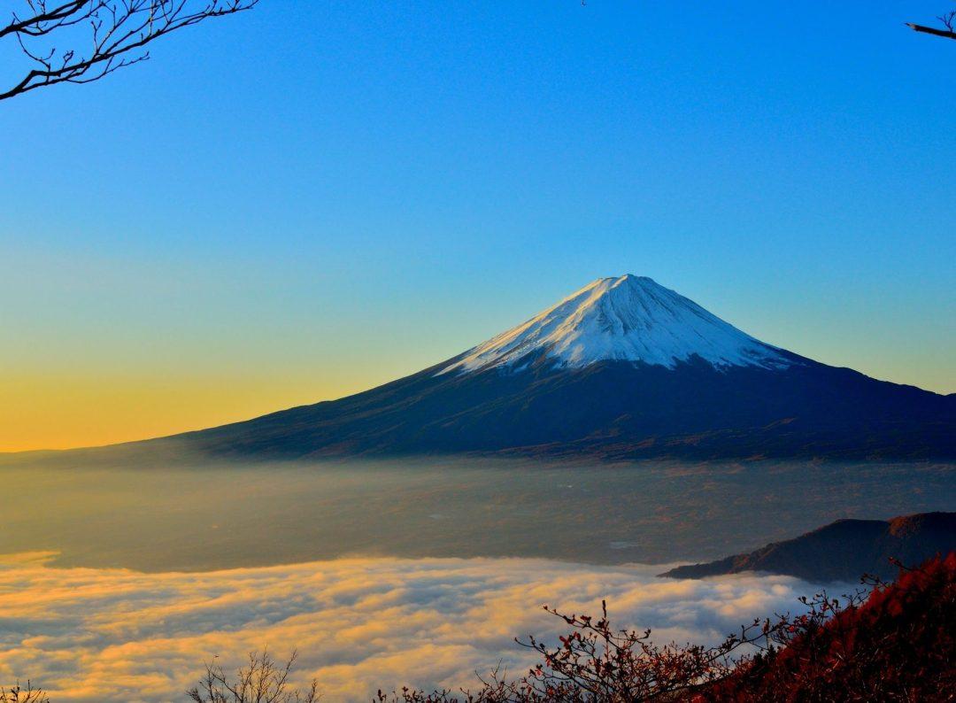 Japan Tea Tour
