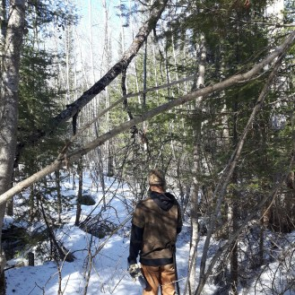 Sly heading through the forest on one of the last snowshoe hikes of the season.