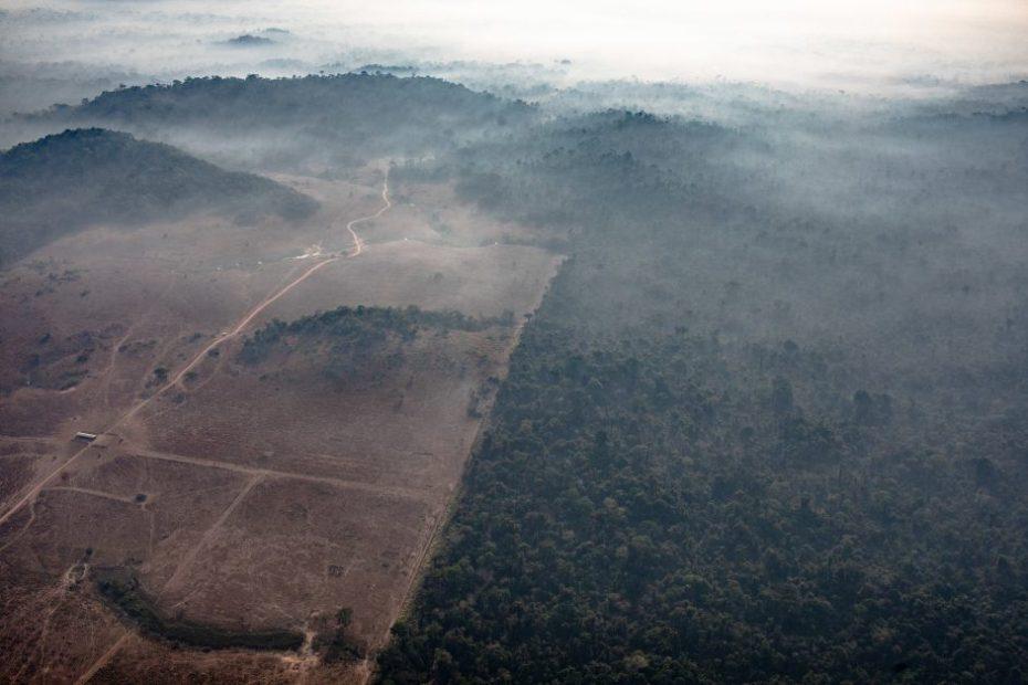 ब्रज़ील में हो रही वर्षावनों की कटाई